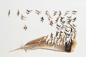 Chris Maynard Uses the Feathers of Birds as His Artistic Canvas
