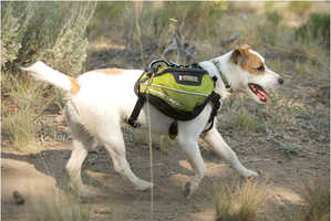 These Dog Packs Let Your Dog Do Some of the Heavy Lifting
