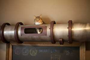 The Cat Transit System Reroutes Kittens Above Ground