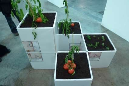 Kamen Stoyanov Tomato Products