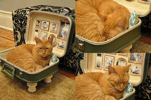 Let Your Cat Snooze in Style with the DIY Cat Suitcase Bed