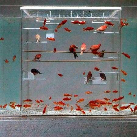 Avian Aquariums - Fish Bird Tanks