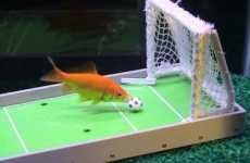 Teach Fish Tricks