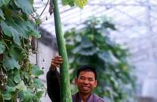 Mega Veggies Could End World Hunger