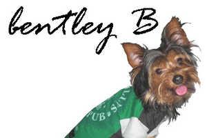 bentley B Recycled Tees