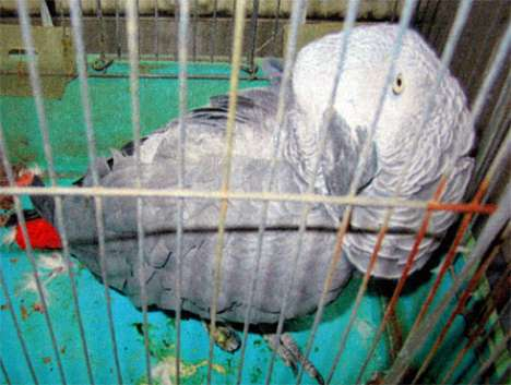 Address-Citing Parrots - African Grey Tells You Where He Lives