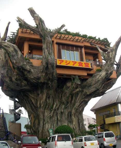 Arboreal Restaurants - Okinawa Tree House