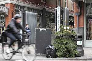 London Artist D*Face Breathes New Life into Discarded Trees