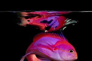 Mark Laita's Sea Collection Captures Neon-Colored Life