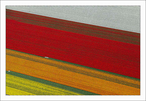 Colorful Aerial Tulip Photography - The Colors of the Netherlands' Flower Fields Pop in These