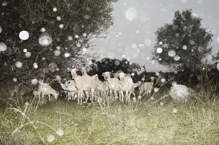 Snow-Speckled Scene Photography