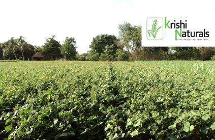Indian Organic Farming Promotion - Krishi Naturals Works with Farmers to Support Biodiversity