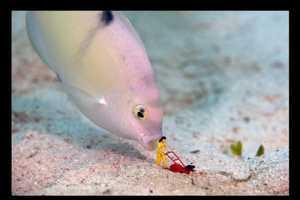 Jason Isley Created Humorous Scenarios with Toys Underwater