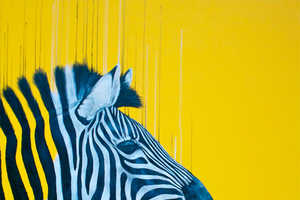 Louise McNaught Sketches Wildlife Using Mixed Media
