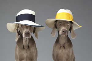 William Wegman Dresses Weimaraners in Luxury Clothing