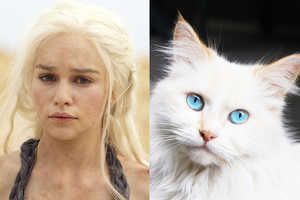 The Cats as Game of Thrones Characters is a Hilarious Comparison