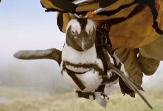 Hang Gliding Penguins