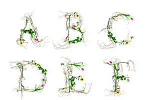 Novo Typo Creates a Typeface from Flowers and Foliage