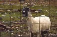 The Ultimate Goat Edition Supercut is Hilarious