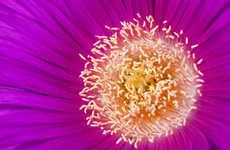 Botanical Closeup Captures