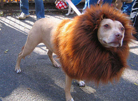 Lion Dog Costumes - Confuse Your Friends and Neighbours With this Hilarious Costume for Your Canine