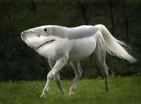 Majestically Morphed Creatures - Weird Animals by Gyyp Features Animals Hilariously Morphed Together