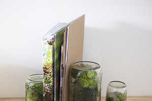 Bring Nature to Your Office with the Design Sponge DIY Office Terrarium