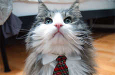 Formal Feline Accessories - These Cat Necktie Collars Would Make Even Grumpy Cat Smile