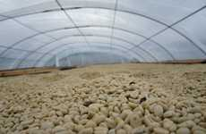 Green Java Distributors - Sustainable Harvest Coffee Importers Helps Farmers Succeed