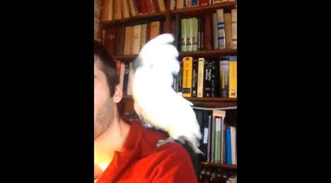 Electro-Dancing Bird Videos  - This Funky Cockatoo is Caught Grooving Vivaciously to Daft Punk