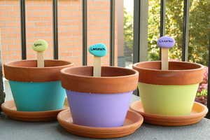 This DIY Activity Allows You to Differentiate Between Plants