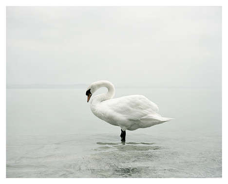 Ghostly Landscape Photography - Stay by Akos Major is Quietly Contemplative and Surreal