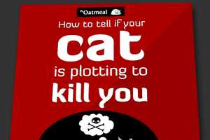 'How to Tell If Your Cat Is Plotting to Kill You' Has Hilarious Insight