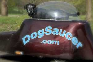 The Dog Saucer Dog Trailer Gives Fido a Spaceship-Style Ride