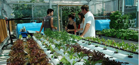 Urban Farming Projects