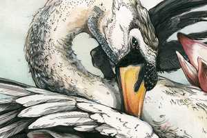 Christina Mrozik's Bird Art Collection is Sumptuously Detailed