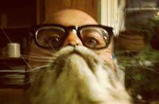 Feline Facial Memes