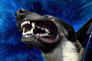 The 'Warp Dog' Series by Benjamin Grelle Depicts Supersonic Canines