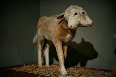 terrifying taxidermy