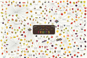 The Various Varieties of Fruits Infographic Charts Out the Popular Food