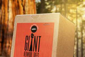 The 'Grow Your Own Giant Redwood Tree' Box is Ecological and Long-Term