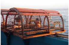 Adopt a Lobster Trap in Maine