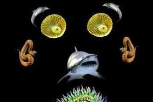 National Aquarium Ad Campaign