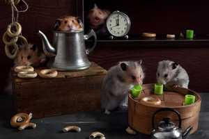 These Animal Still Life Photos Focus on Little Hamsters with Fun Props