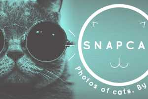 The Snapcat App Lets Kitties Take Selfies by Pawing at the Screen