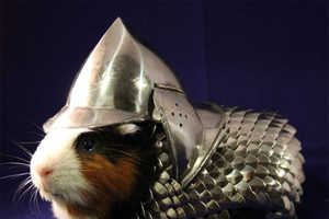 This Guinea Pig Costume Will Provide Adequate Protection for Your Pet