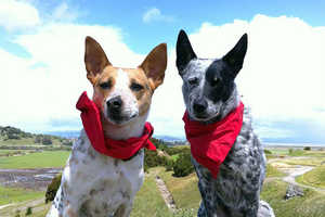 The 'Insect Shield Dog Bandana' Protects Pets Against Harmful Bugs