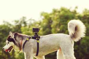 The Action Cam Dog Mount Captures a Pooches Point-of-View