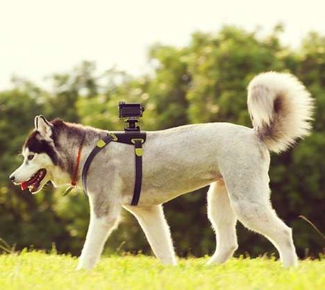 Canine Camera Equipment - The Action Cam Dog Mount Captures a Pooches Point-of-View