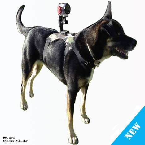 Action Cam Dog Mount